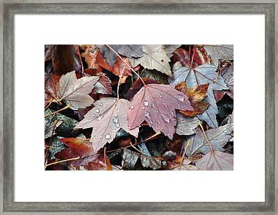 Autumn Cries Framed Print