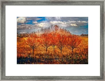 Autumn Cypress Framed Print by Debra and Dave Vanderlaan