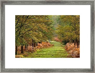 Autumn Dames New Forest Framed Print
