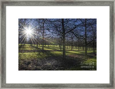 Autumn Day Framed Print by Bruno Santoro