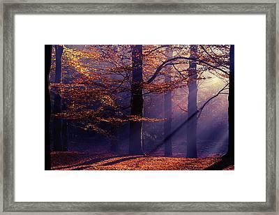 Autumn Delight Framed Print by Roeselien Raimond