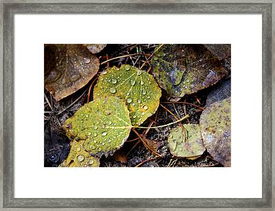 Autumn Dew Framed Print