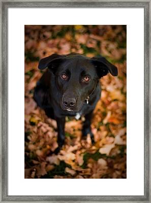 Autumn Dog Framed Print