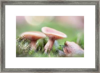 Autumn Dream Framed Print by Dirk Ercken