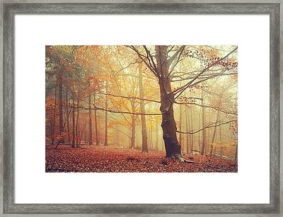 Autumn Dreams Of Oak Tree 1 Framed Print