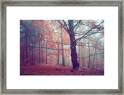 Autumn Dreams Of Oak Tree Framed Print