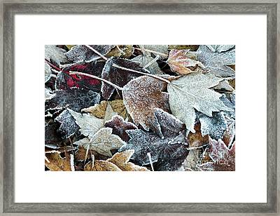 Framed Print featuring the photograph Autumn Ends, Winter Begins 1 by Linda Lees