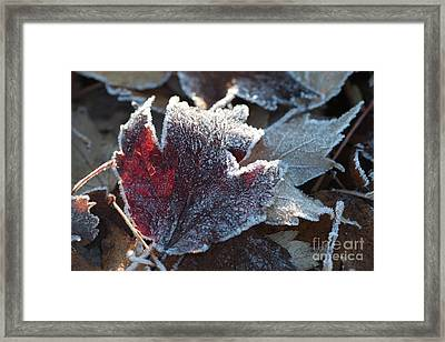 Framed Print featuring the photograph Autumn Ends, Winter Begins 2 by Linda Lees