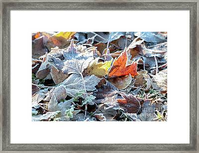 Framed Print featuring the photograph Autumn Ends, Winter Begins 3 by Linda Lees