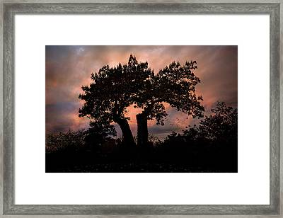 Framed Print featuring the photograph Autumn Evening Sunset Silhouette by Chris Lord