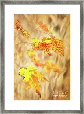Autumn Fall Color Maple Leaves In The Blue Ridge Ap Framed Print by Dan Carmichael