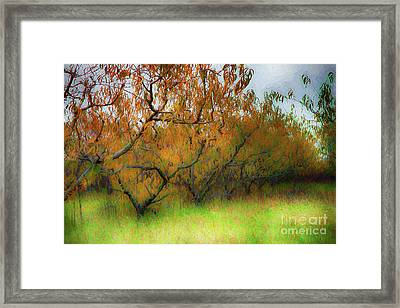 Autumn Fall Colors In A Peach Orchard Ap1 Framed Print