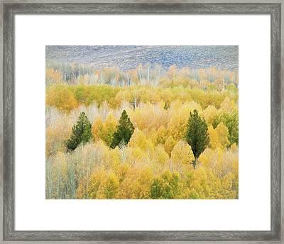 Autumn Fall Foliage Framed Print