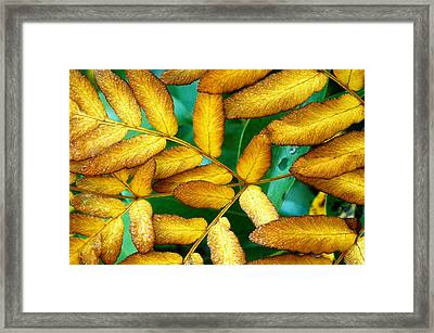 Autumn Fern 2 Framed Print by Tony Ramos