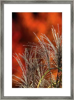 Autumn Fire - 1 Framed Print
