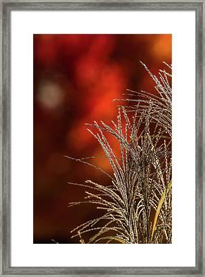 Autumn Fire - 2 Framed Print