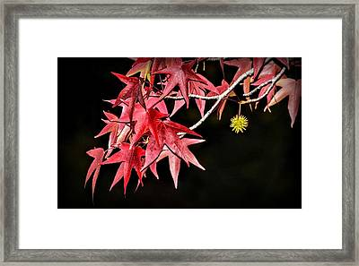 Framed Print featuring the photograph Autumn Fire by AJ Schibig