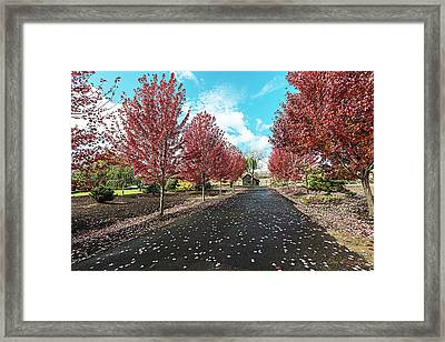 Autumn Fire Framed Print