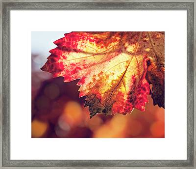 Framed Print featuring the photograph Autumn Fire by Melanie Alexandra Price
