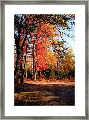 Autumn Flame Framed Print by Jennifer Englehardt