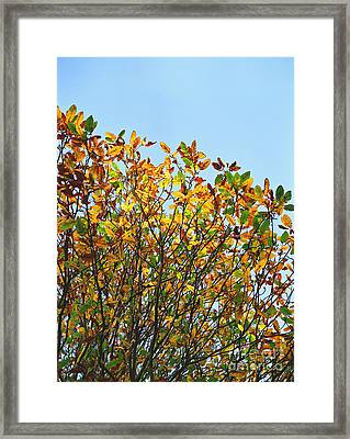 Framed Print featuring the photograph Autumn Flames - Original by Rebecca Harman