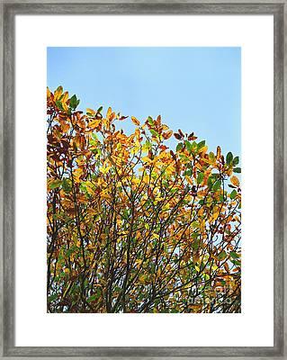 Autumn Flames - Original Framed Print