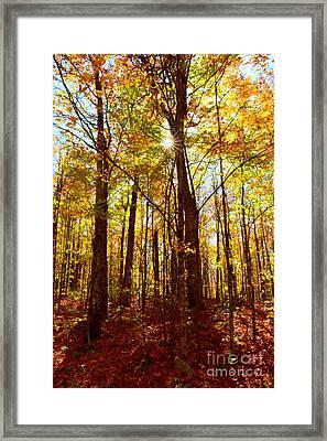 Autumn Flare Framed Print