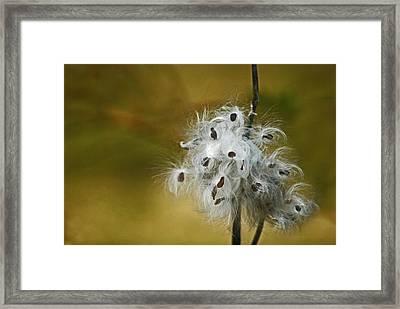 Autumn Floral Framed Print by Elsa Marie Santoro