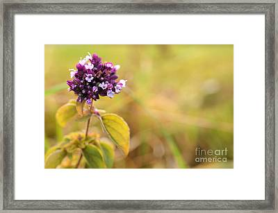 Autumn Flower In A Field Framed Print by Sabine Jacobs