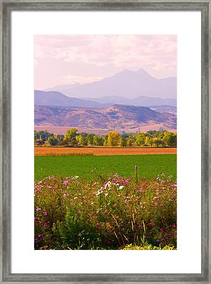Autumn Flowers At Harvest Time Framed Print by James BO  Insogna