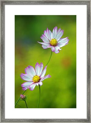 Framed Print featuring the photograph Autumn Flowers by Byron Varvarigos