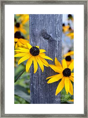 Autumn Flowers Yellow Framed Print by Sabine Jacobs