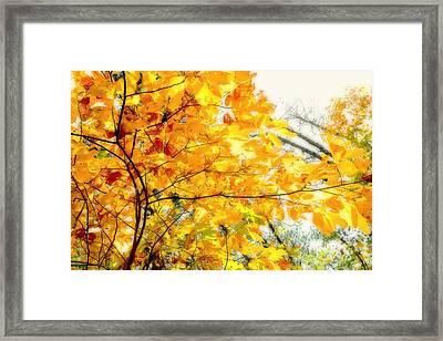 Autumn Flutter Framed Print by John Mueller