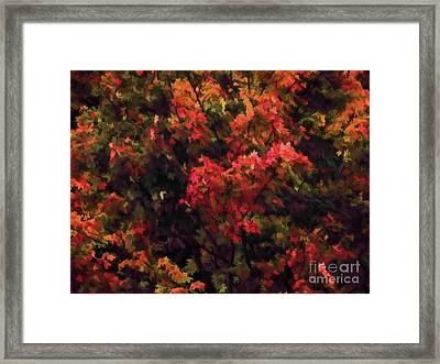 Autumn Foliage 4 Framed Print
