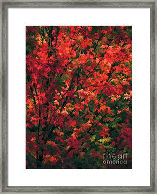 Autumn Foliage 6 Framed Print
