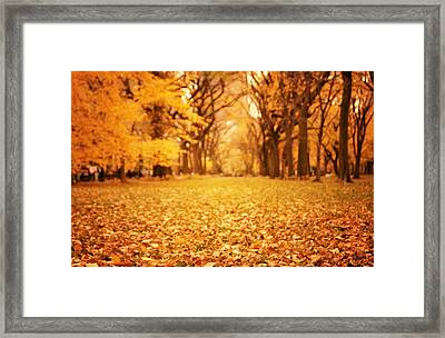 Autumn Foliage - Central Park - New York City Framed Print by Vivienne Gucwa