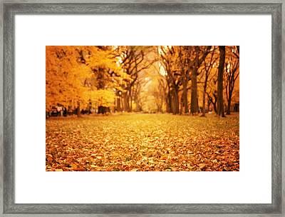 Autumn Foliage - Central Park - New York City Framed Print by Vivienne Gucwa
