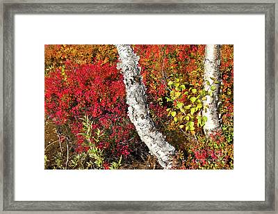 Autumn Foliage In Finland Framed Print by Heiko Koehrer-Wagner