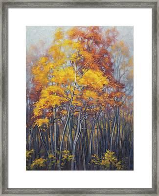 Autumn Forest 2 Framed Print by Fiona Craig