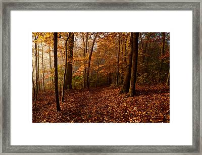 Autumn Forest Framed Print by Ann Bridges