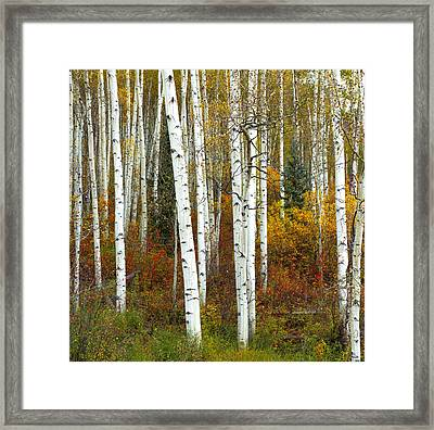 Autumn Forest Beauty Framed Print