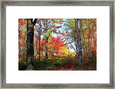Framed Print featuring the photograph Autumn Forest by Debbie Oppermann