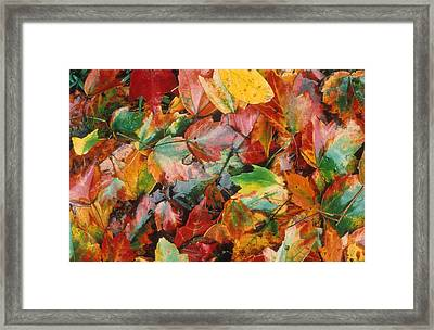 Autumn Forest Floor Framed Print by Gerard Fritz