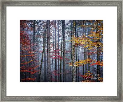 Autumn Forest In Fog Framed Print