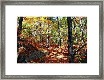 Autumn Forest Killarney Framed Print by Debbie Oppermann