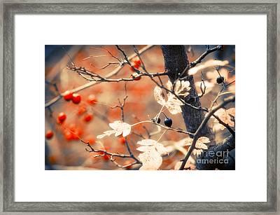 Autumn Forest Framed Print by Konstantin Sevostyanov