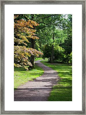 Framed Print featuring the photograph Autumn Forest Path by Scott Lyons