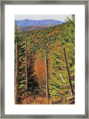 Autumn From The Top Of Clingman's Dome Framed Print by Dan Sproul