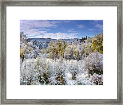 Autumn Frost And Texture Framed Print