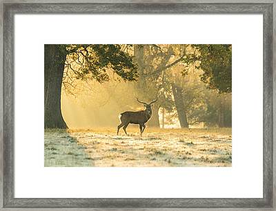 Framed Print featuring the photograph Autumn Frost by Scott Carruthers